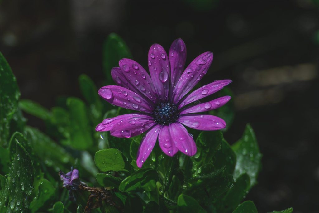 Produktfotografie Blumen